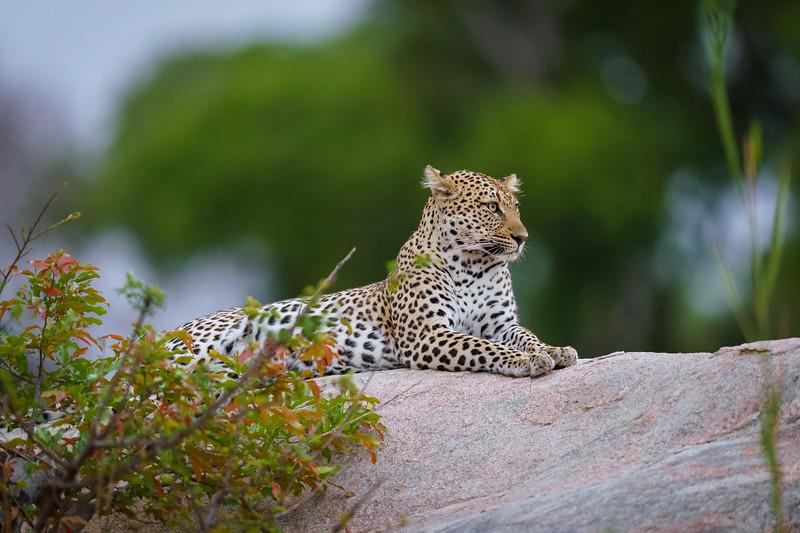 LeopardHills-20191029-2406.jpg