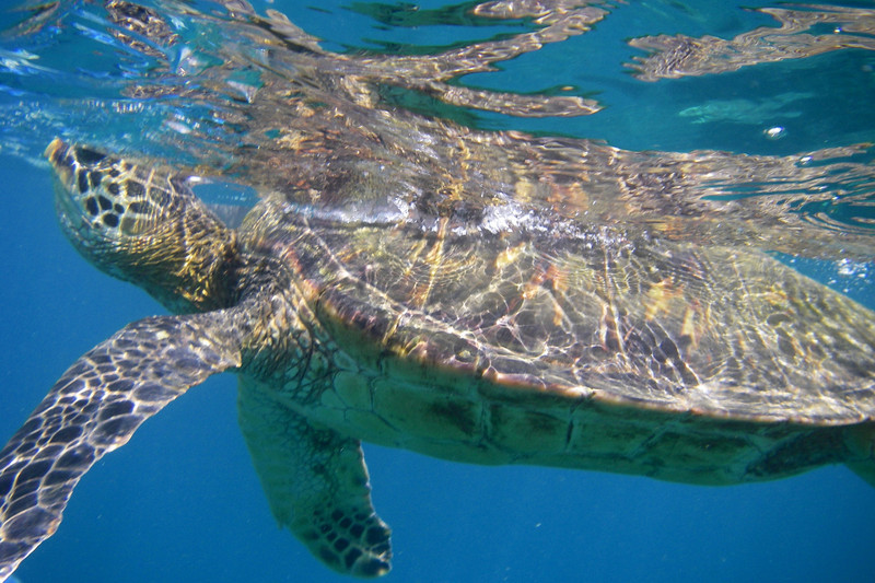 Turtle Town Snorkel 11167 4x6