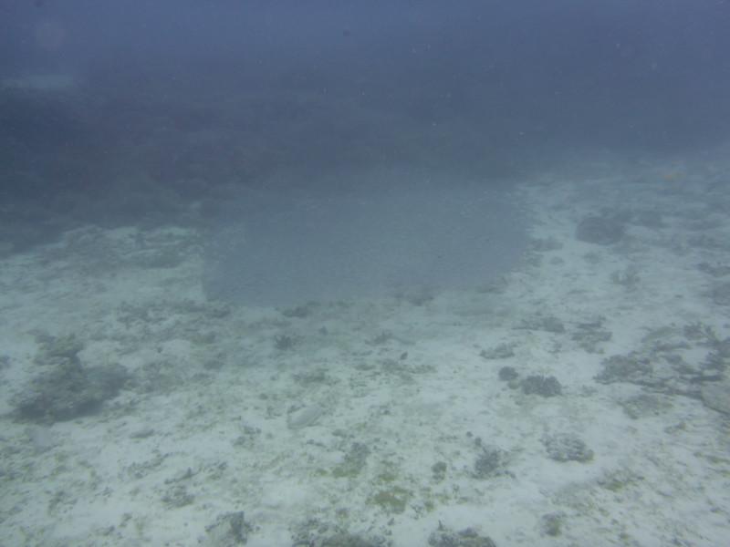 09. Lady Elliott Island-0395.jpg