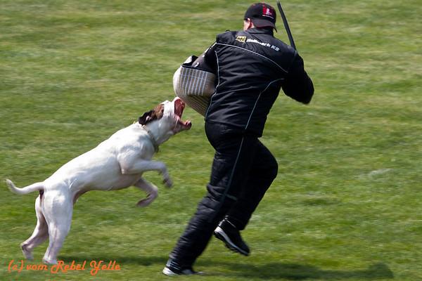 2010 Working Dog Championship