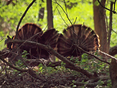 Marshlands Conservancy Birds