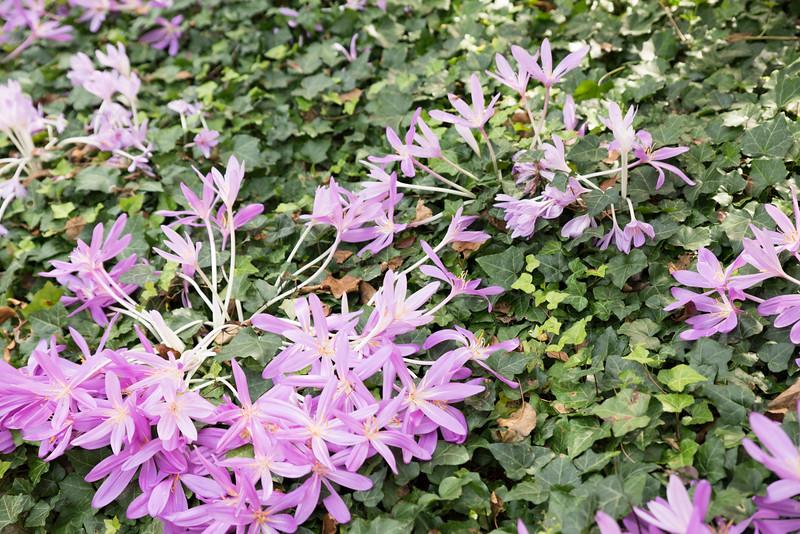 Chicago Botanic Garden 040.jpg