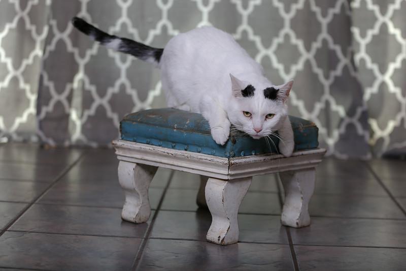 Polzin Cats-1.jpg