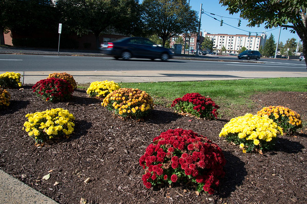 10/14/19 Wesley Bunnell | StaffrrMums in different colors planted in front of Liberty Square.