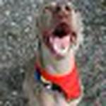 farley pups 095-2.jpg