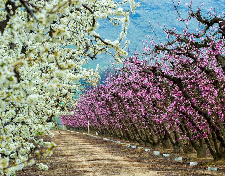 BlossomTrail-13.jpg