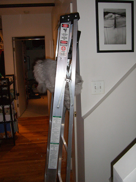 2006-11-12-20-44-29 2006-11-12 CIMG3323.jpg