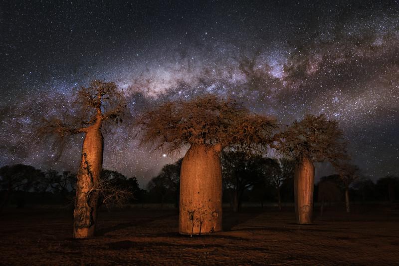 Three Baobabs
