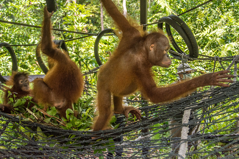 Borneo-2258-2.jpg