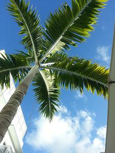 2013 Miami