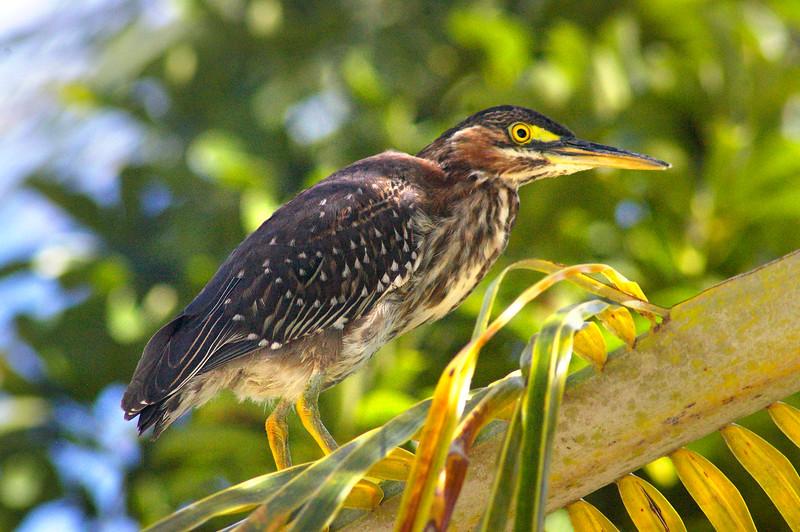 3_18_20 Seabird in Belle Vista.jpg