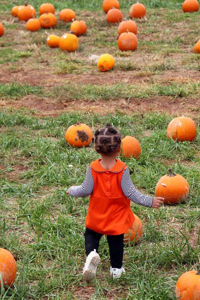 Pumpkin Patches