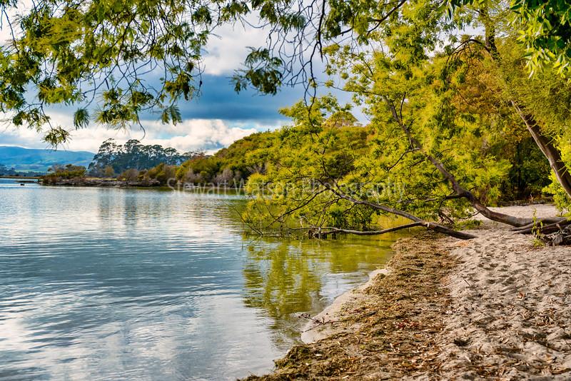 The tree lined shores of Lake Tarawera in Rotorua New Zealand