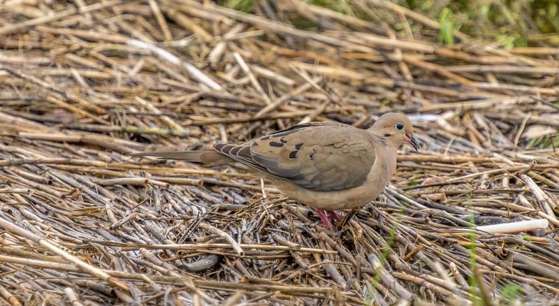 7-4-21 unknown bird -3.jpg