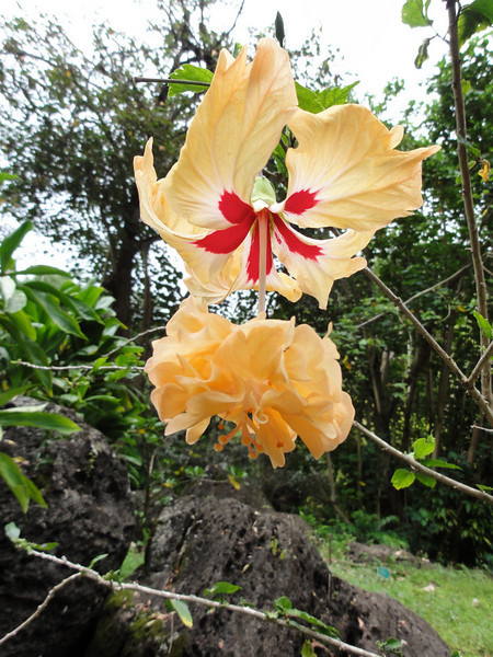 Oahu Hawaii 2011 - 120.jpg