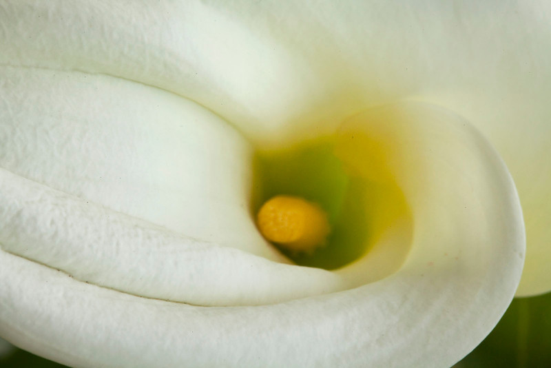 Heart of Calla