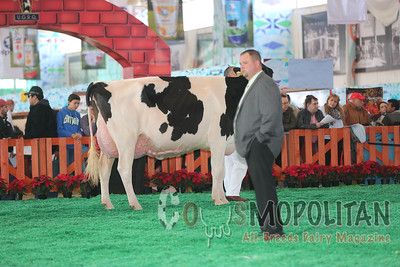 Mexico Natl Holstein Sr Cows