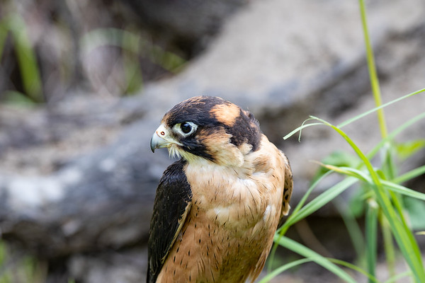 Seward Park Audubon
