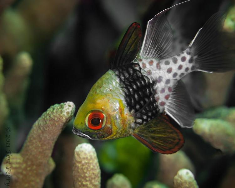 fish pajama cardinal-2.jpg