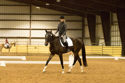 Horse 634