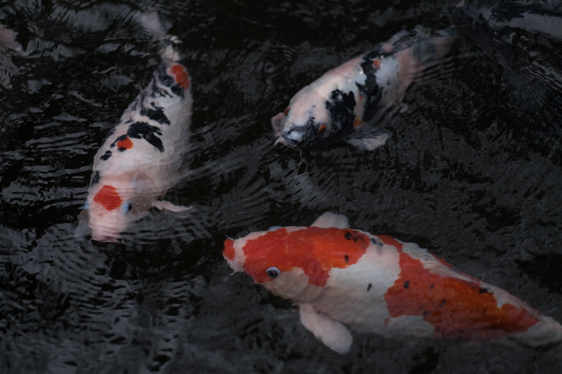 2019-12-21 Japan-1319.jpg