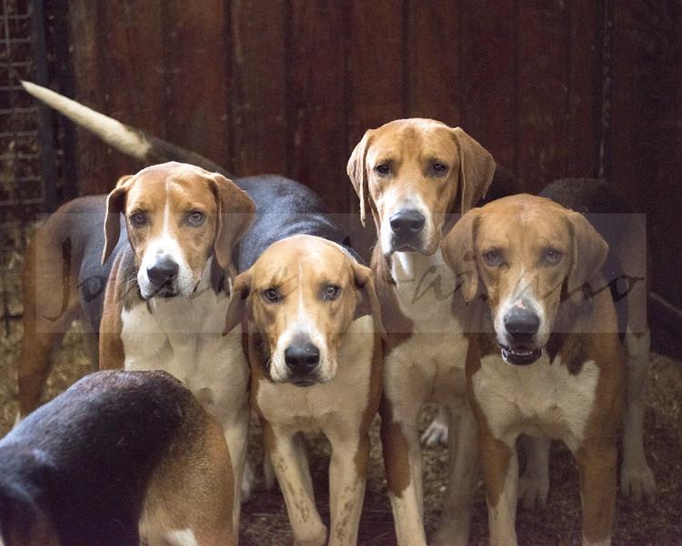 Loudoun Fairfax Puppy Show 5-19-18