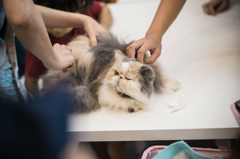 VividSnaps-The-Seletar-Mall-CAT-Dress-Up-Contest-100.jpg