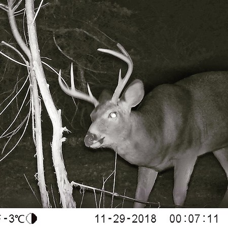 Game Camera Images