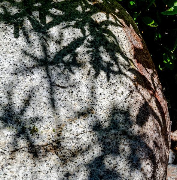 Shadows 201605