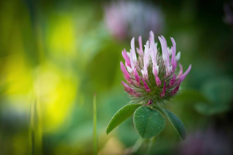 Flowers 20170330-173.jpg