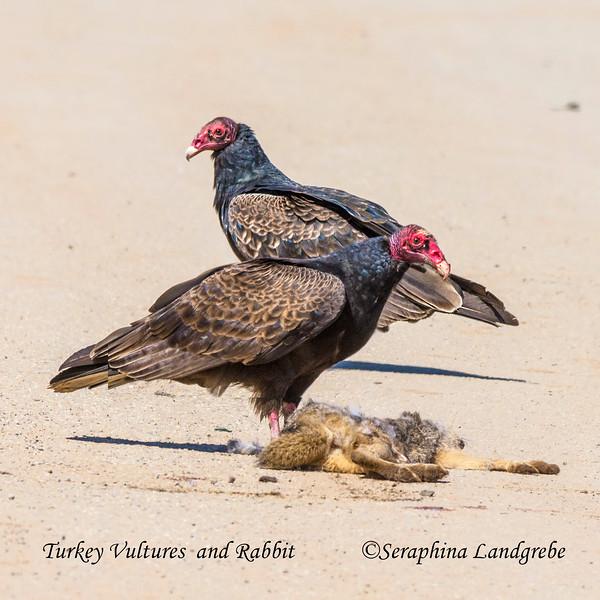 _DSC7957Two vultures.jpg