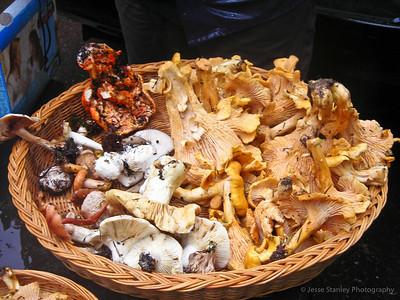 Mushroom Hunting 2011