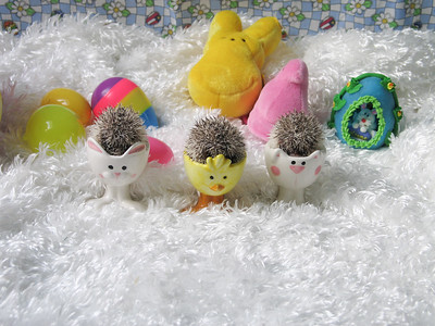 Easter Hedgies 2006