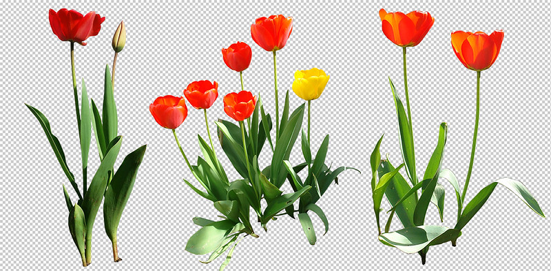 tulips_preview_by_gd08.jpg