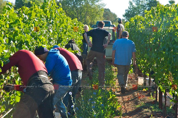 Cartograph Harvest at Floodgate Vineyard