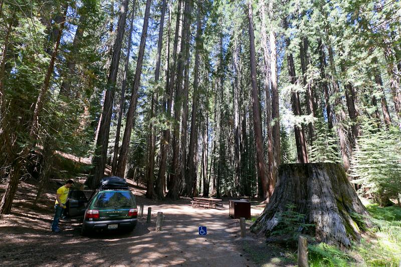 Sequoia_0124.jpg