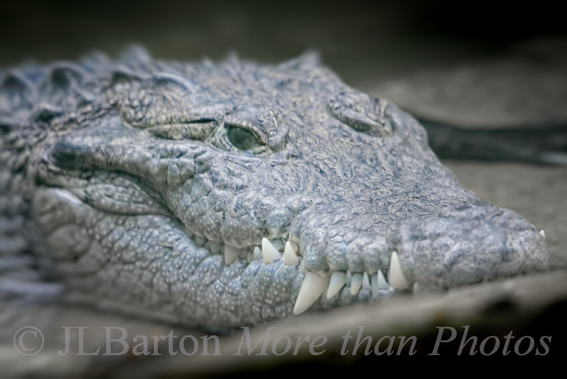 Who is watching whom?