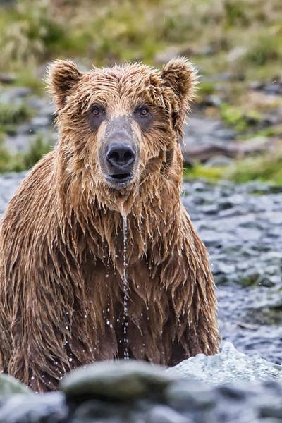 Alaska_2013_FH0T3683.jpg