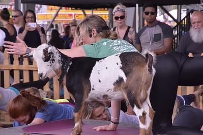 Goat Yoga @ Clay County Fair