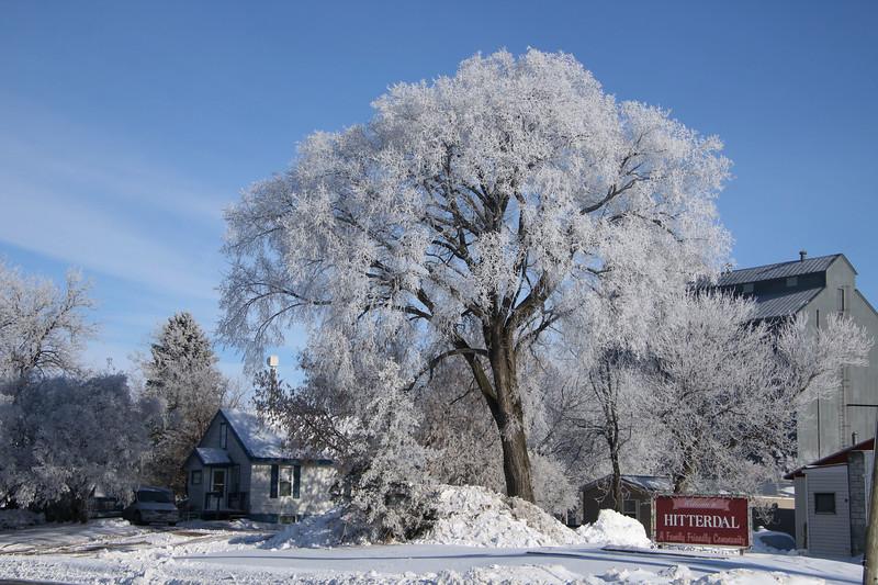 Winter Wonders 03.jpg