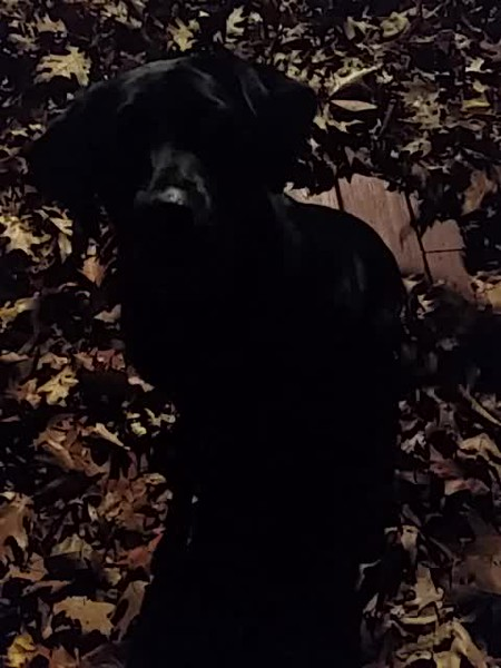 Rosie in the leaves.mp4