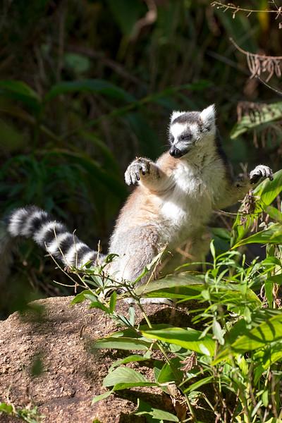 Madagascar_2013_FH0T1490.jpg