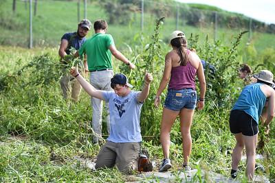35874 Service Day Organic Farm August 2019