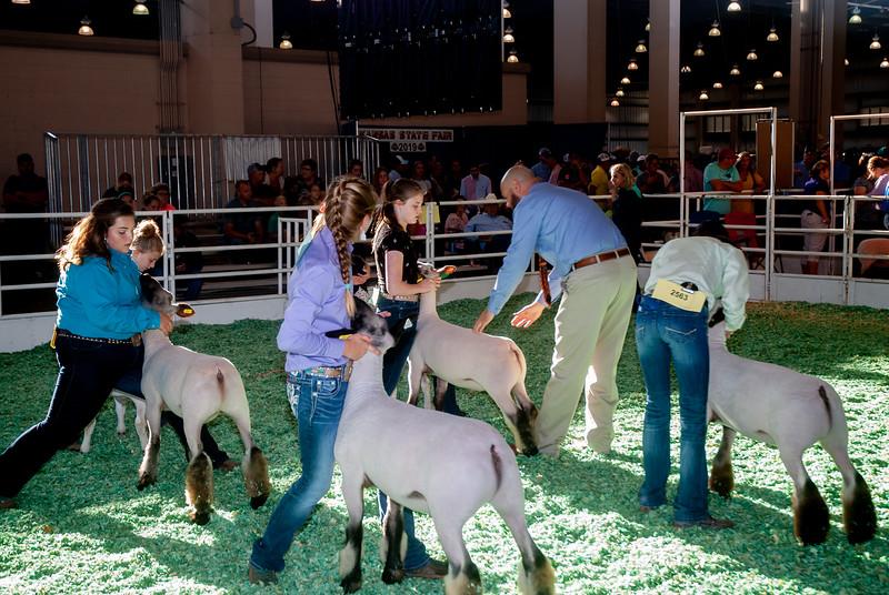 ks_state_fair_2019_lambs-4.jpg