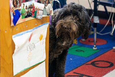 #2181/2182 Ariel the Service Dog, 12/11/18