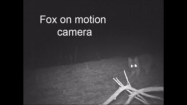 Night motion camera