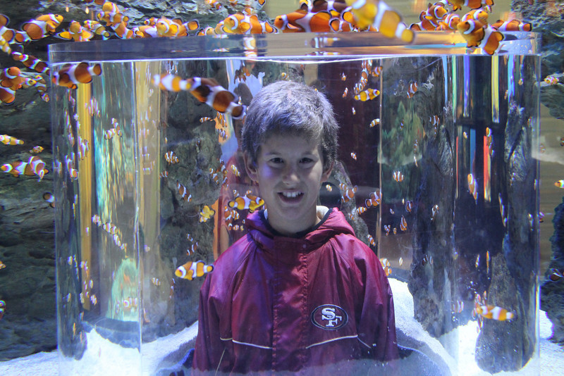 Two Oceans Aquarium
