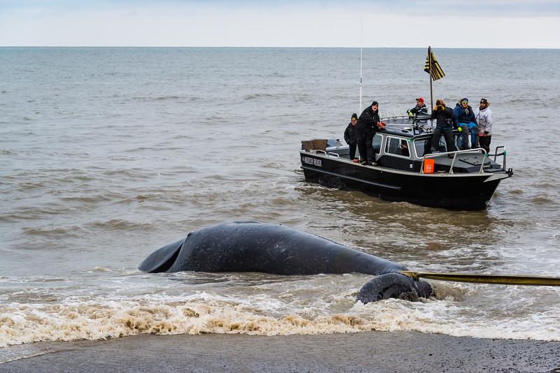 Utqiagvik Whaling-6104338-Juno Kim-nw.jpg