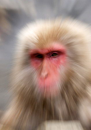 Snow Monkeys/Japan 2007