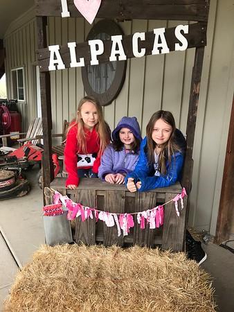Alpaca Farm Visit 2019